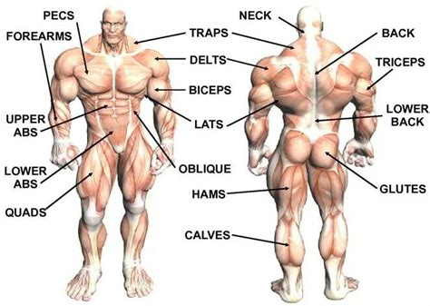 best way to build muscle picture 2