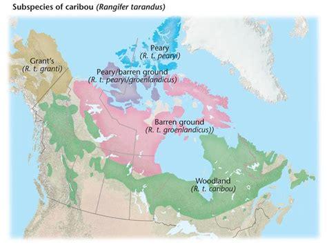 caribou skin picture 17