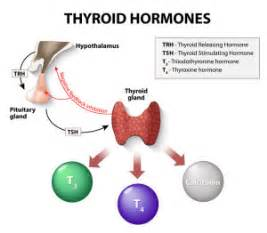 different thyroid medications picture 11