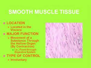 functions of smooth muscle picture 7