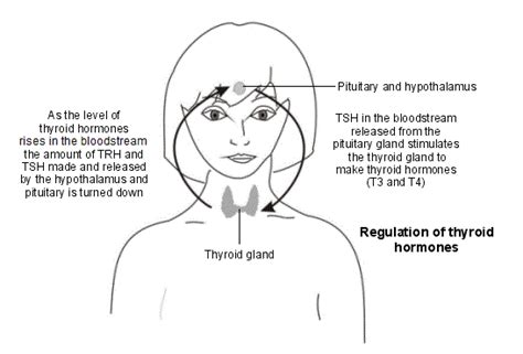 can thyroid cause ps in head picture 15