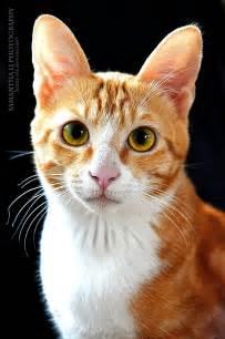 feline h picture 11