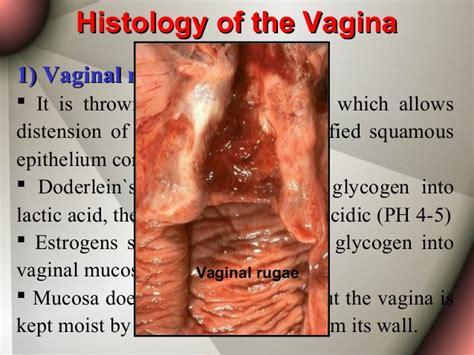 inner vaginal rugae picture 7