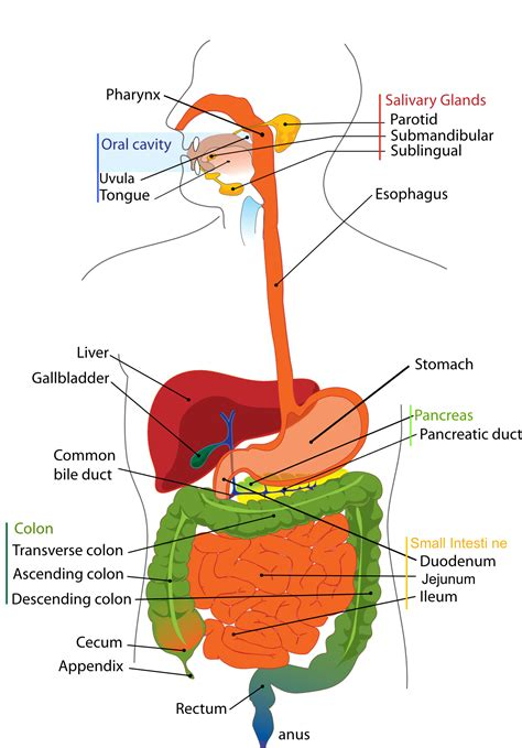 lower left intestinal pain picture 5