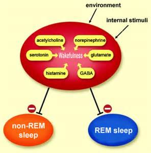 non rem sleep picture 13