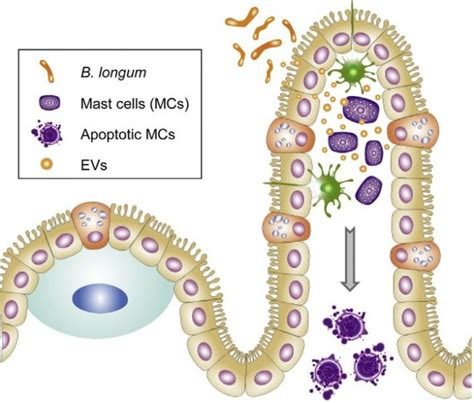 allergic reaction to probiotics picture 3