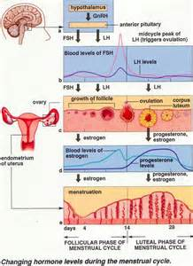 testosterone cycle sex picture 7