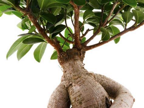 hoodia gordonii plant picture 5