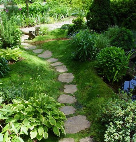 white irish moss picture 3