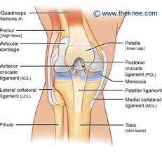inner knee joint tendon injury picture 6