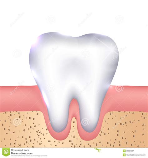 aight white healthy teeth picture 9