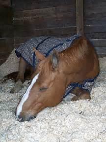 pony sleeping picture 9