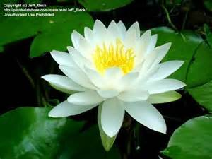 homeopathic madicinal plants bangladesh and india picture 11