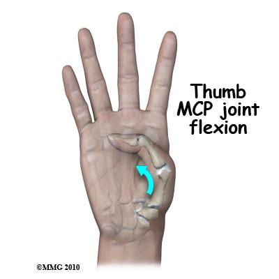metacarpal phalangeal joint measurement picture 8