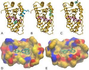 testosterone molecule picture 9