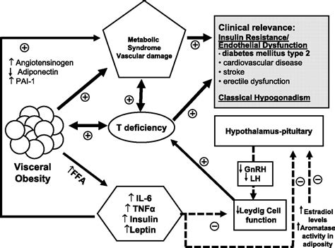 testosterone deficiency and obesity picture 6