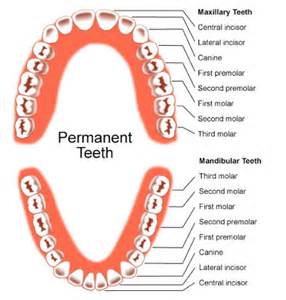 molar h names picture 1