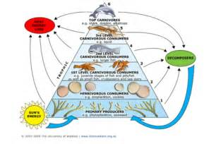 zone diet how many shrimp equal to 1 picture 12