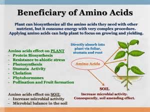 amino acids to increase libido picture 5