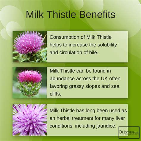 milk thistle acne picture 7