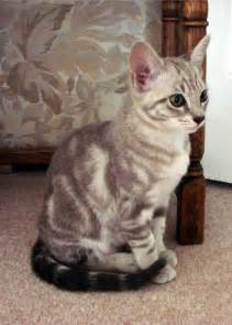 hair loss in kittens picture 7