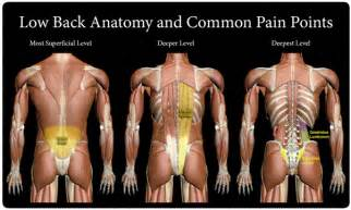 back muscle and tendon pain picture 17