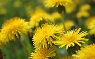 steve schroeder dandelion wine picture 3