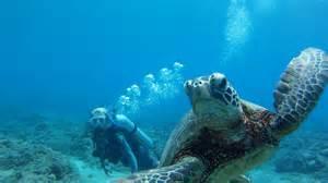 hawaii skin diver magazine picture 6
