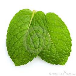 fresh mint stress and hypertension picture 13