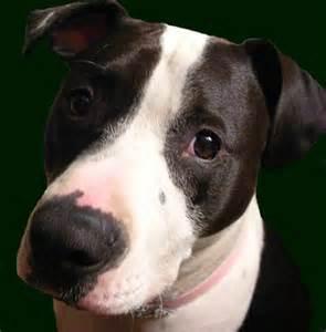 dog bladder control picture 14