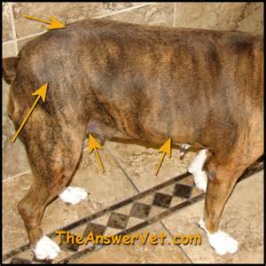 dog thyroid problem picture 2