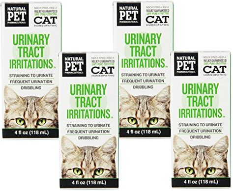 cat urinary tract infection stretching picture 3