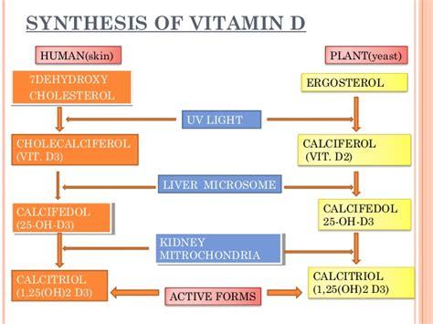 cod liver oil cholesterol picture 7
