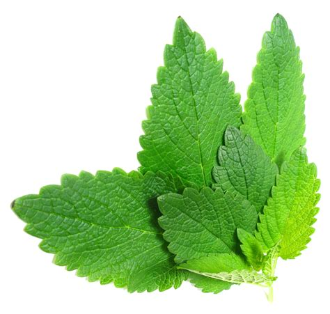 what natural herb natural herb that acts as picture 1