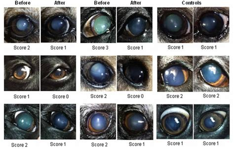 herbal eye drops for cats with cataracts picture 7