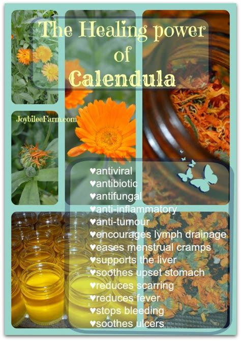 herbal supplies picture 6