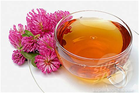 search : info about red clover tea picture 9