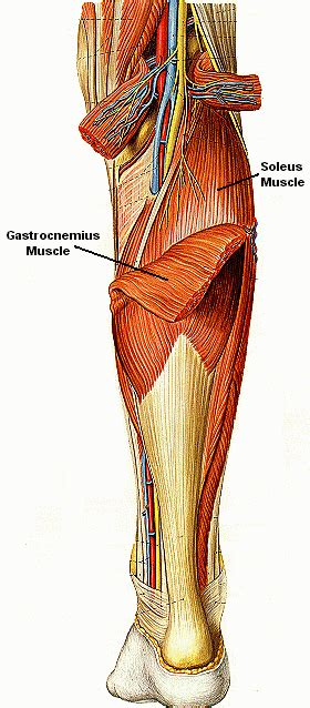 calve muscle tear picture 1