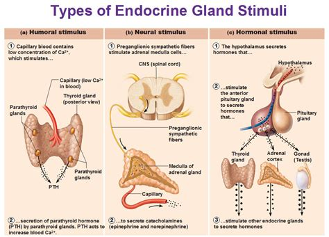 what does it means when the thyroid gland picture 5
