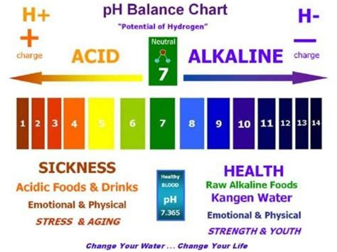 food and the acid-alkali balance of the body picture 12