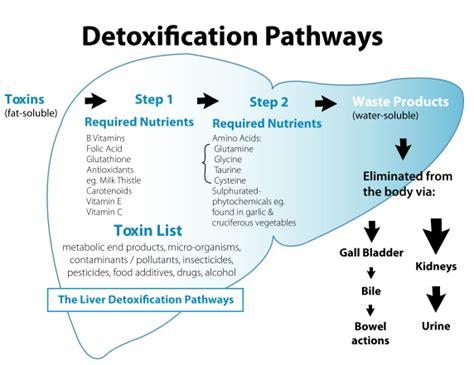 alcohol detox liver picture 19