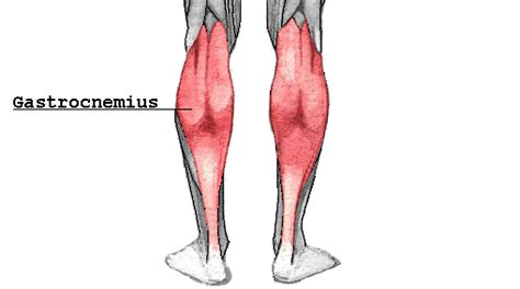 diagnose muscle tears picture 9