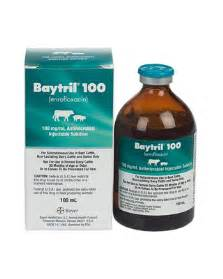 baytril skin infection picture 2