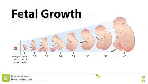 fetal development hair growth picture 14