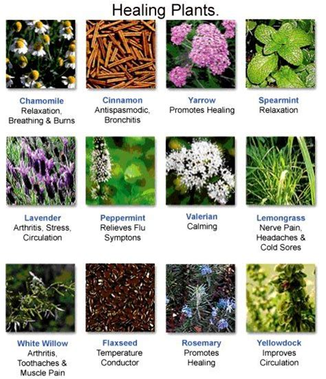 natural herbal plants remedy for singaw picture 6