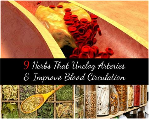 herb increase orus blood flow picture 13