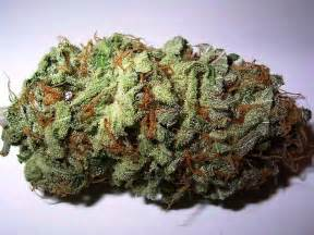 Legal herbal bud picture 2