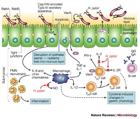 h infections picture 1