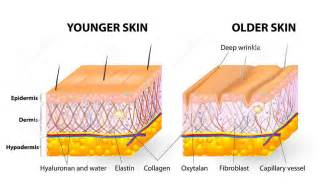 is it possible to build collagen and elasticin picture 5