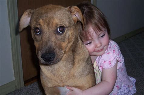 human canine h picture 11